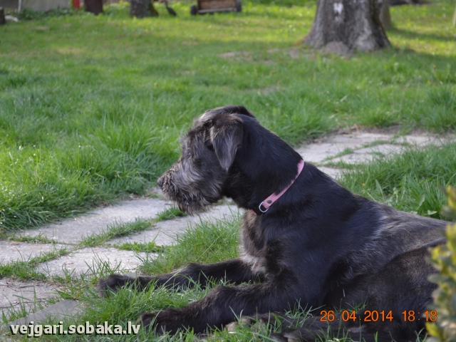 27.04.2014. 