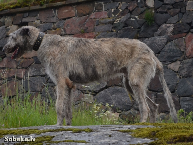 16.06.2014. 