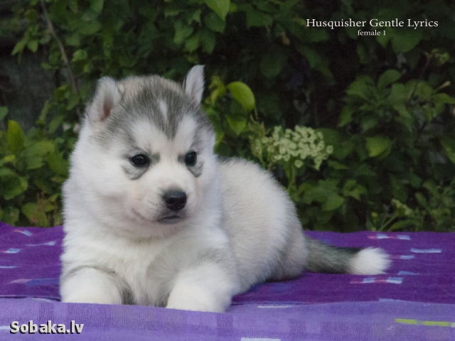 Сука №1. 
