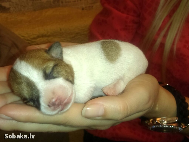 Мальчишки!. 