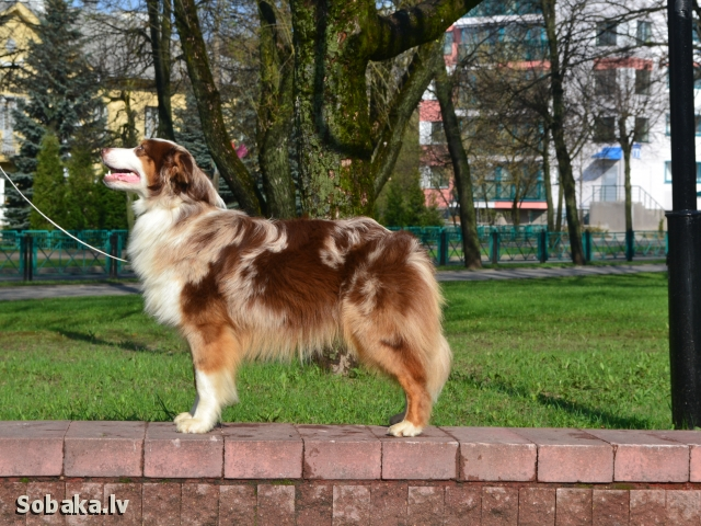 Бренди. 