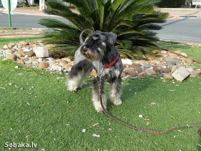 Ниццулюшка. 