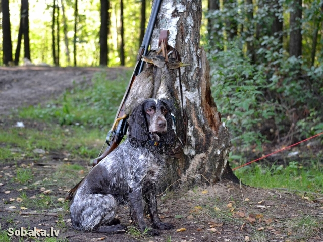 Охота на утку. 