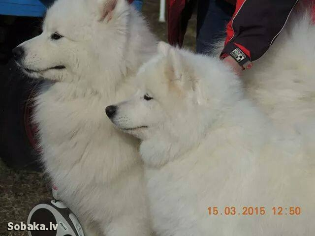 Тери. 