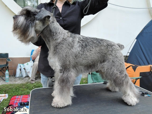 Перед рингом, 2015 год, Моно ЧК. 