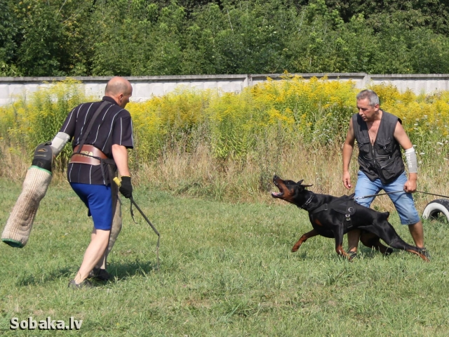 На охране!!. 