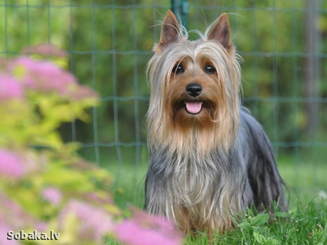World Winner 2015. 