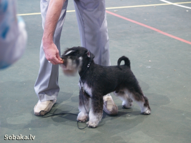 Дарк. 