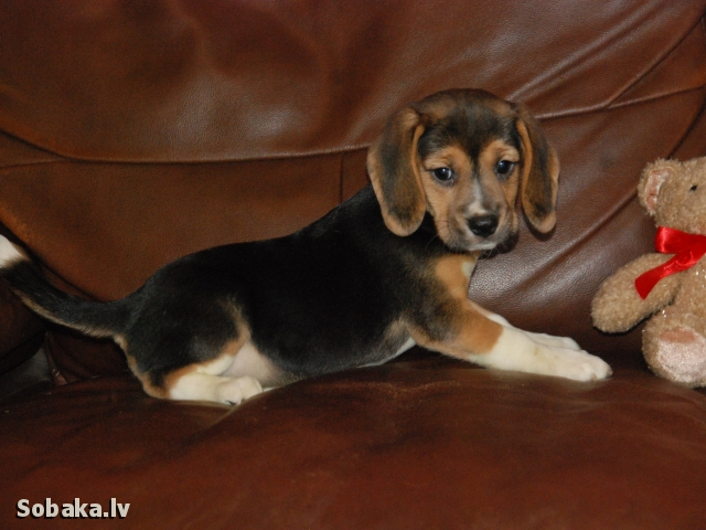 Девочка свободная. 