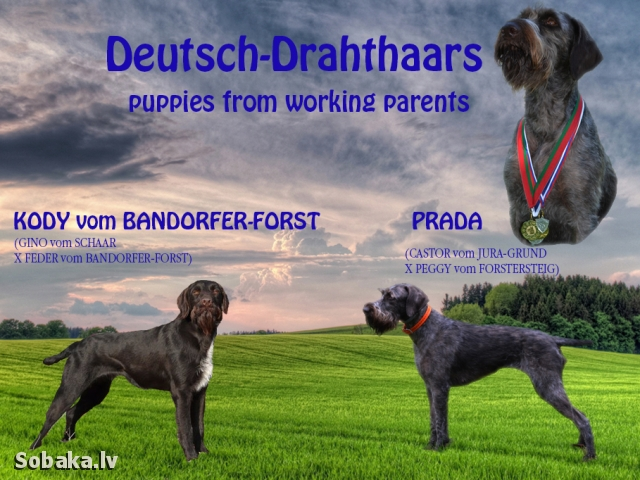Фото Коди и Прады. 