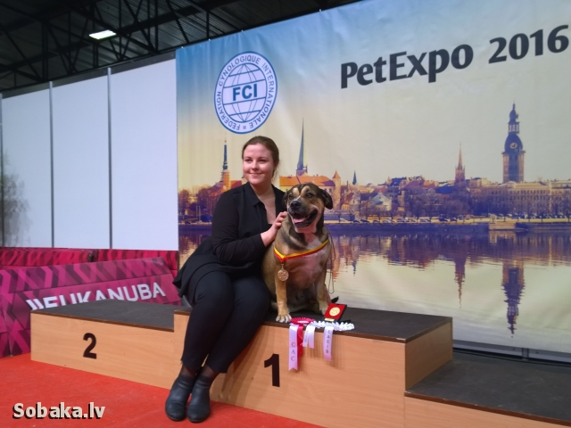 ФОТОГАЛЕРЕЯ. International Dog Show PET EXPO 2016 (FCI CACIB).