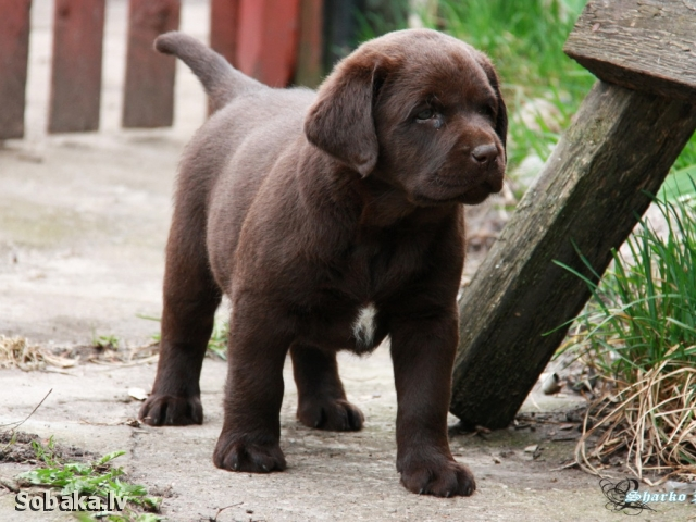Измаил Скарб Сэрца. 