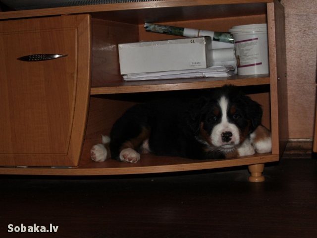 Ketsher & Olympia. 