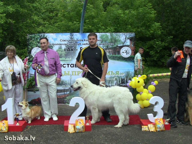 Выставка. 