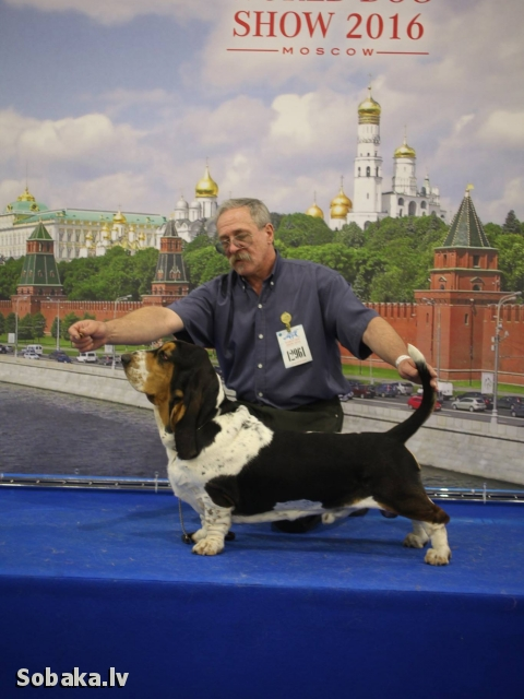 AB Akela Black @ WDS 2016. 