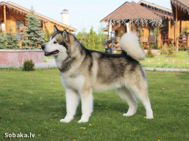 Гольф. 