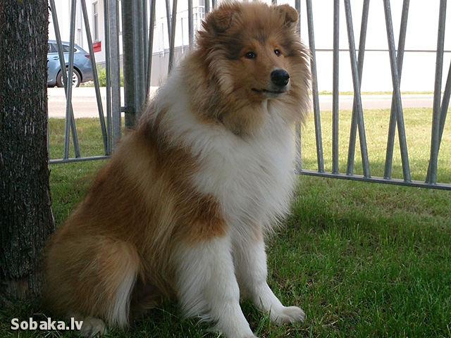 Под деревом. 