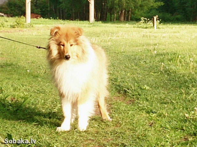 Хорошо на солнышке в лесу. 