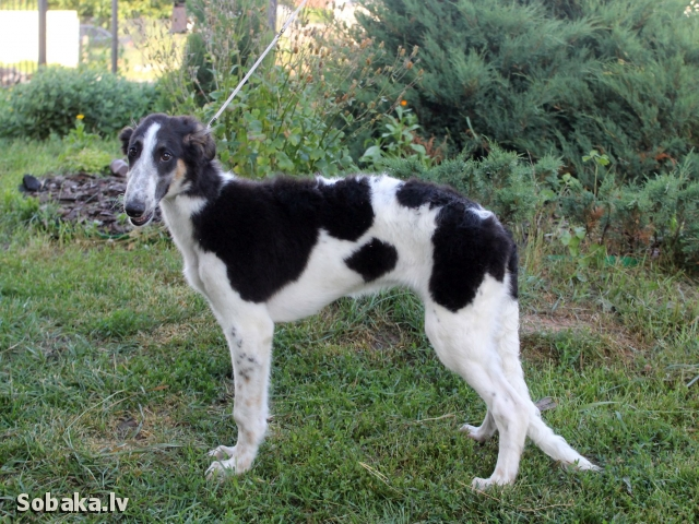 Стойка. 