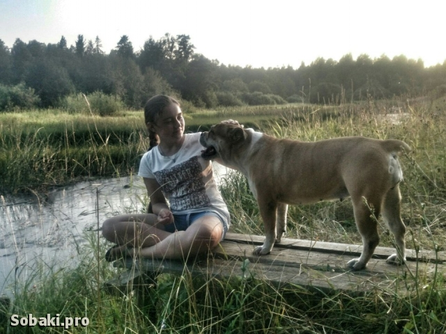 MAJORCA MASTIFF => PHOTOS  