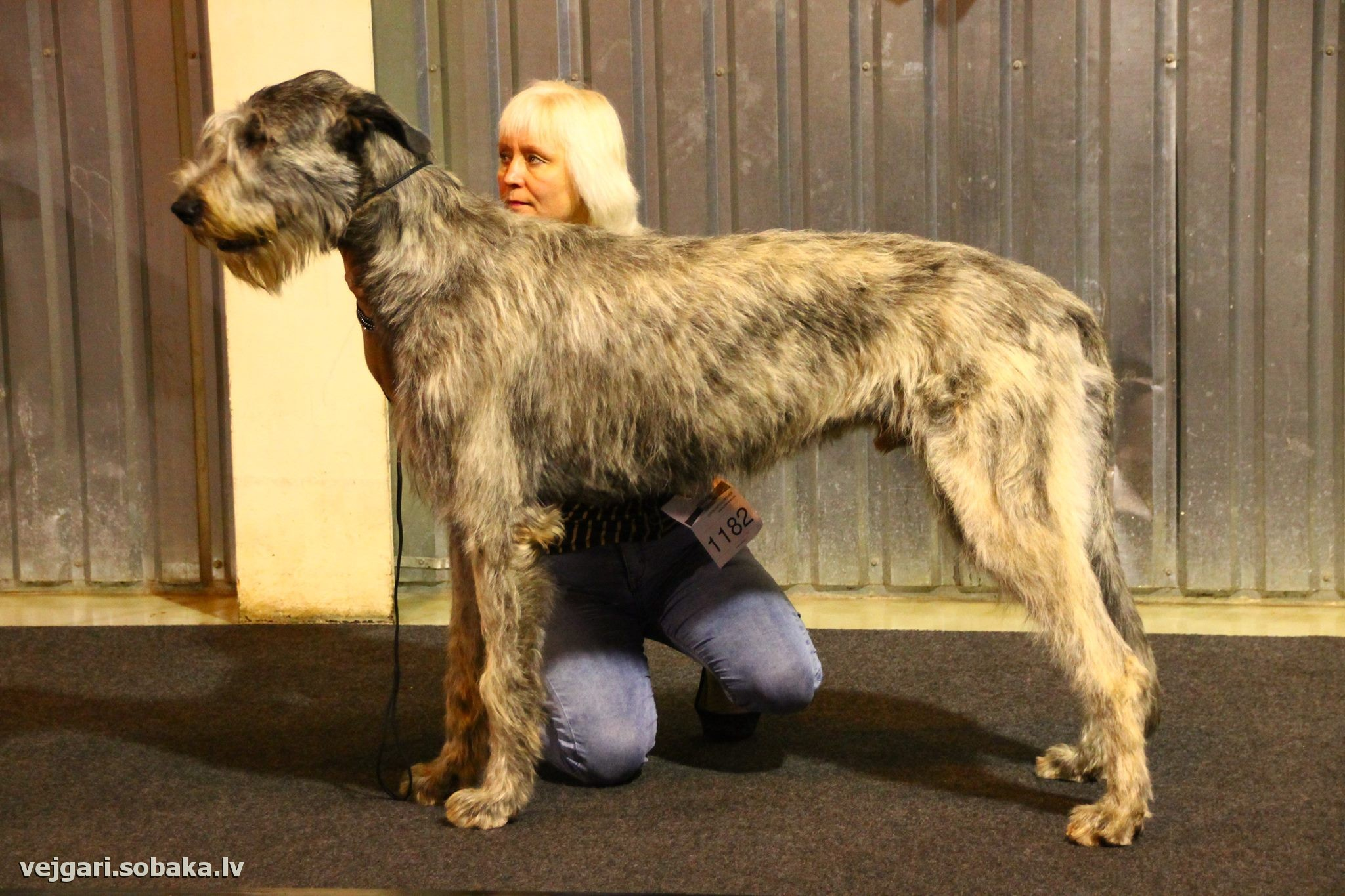 Irish Wolfhound   Фото 107269