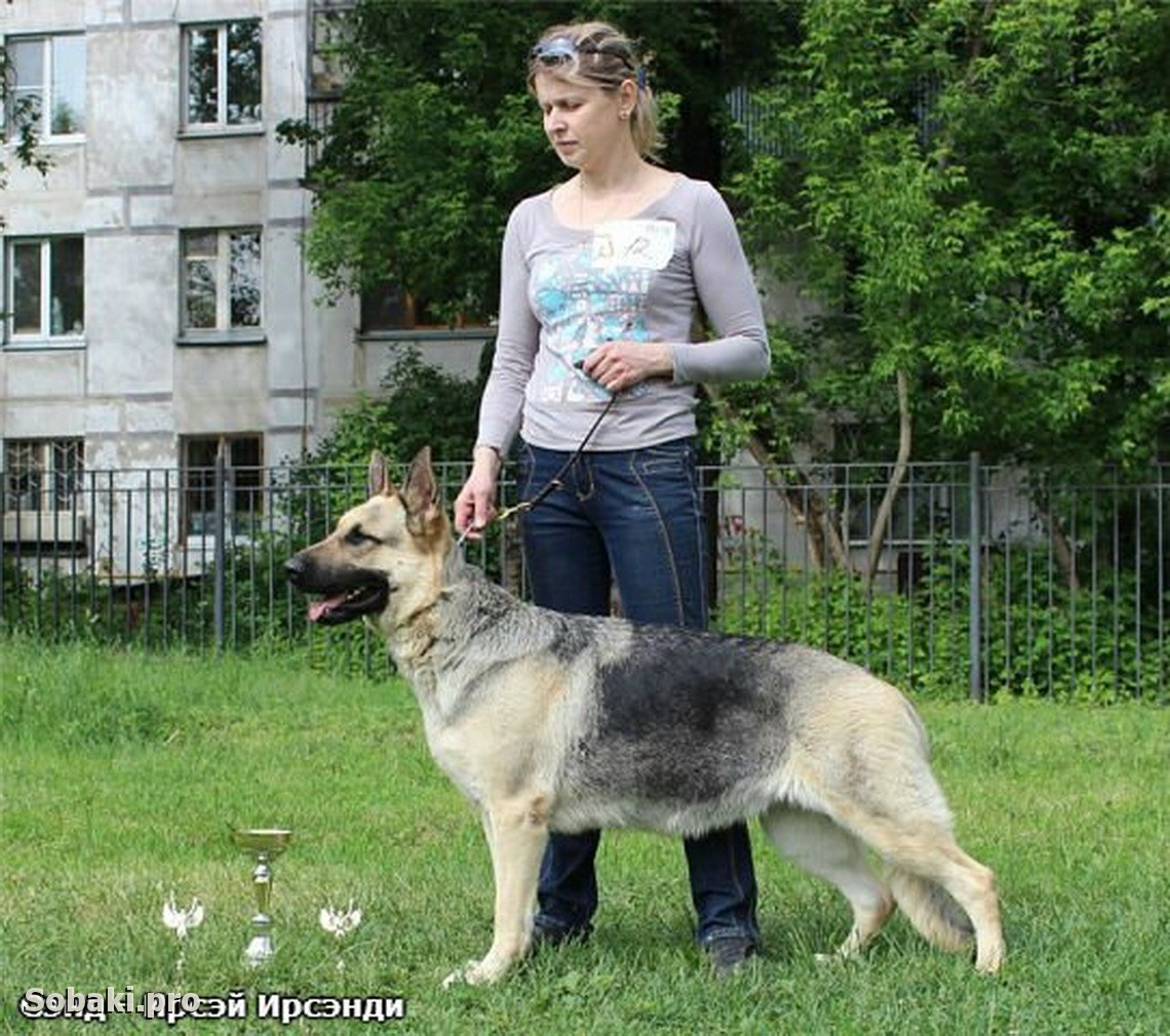 East evropean shepherd dog   Фото 107622