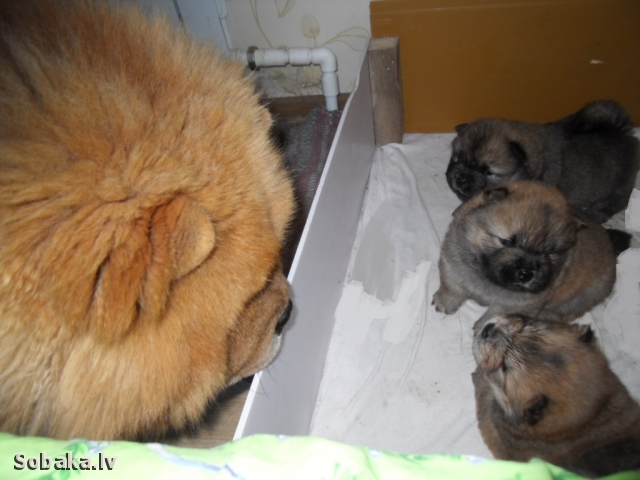 Знакомство с детками. 