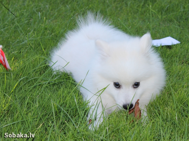 Малыши. 