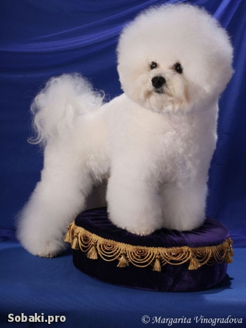 Боня. 