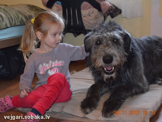 Irish Wolfhound 107430.jpg