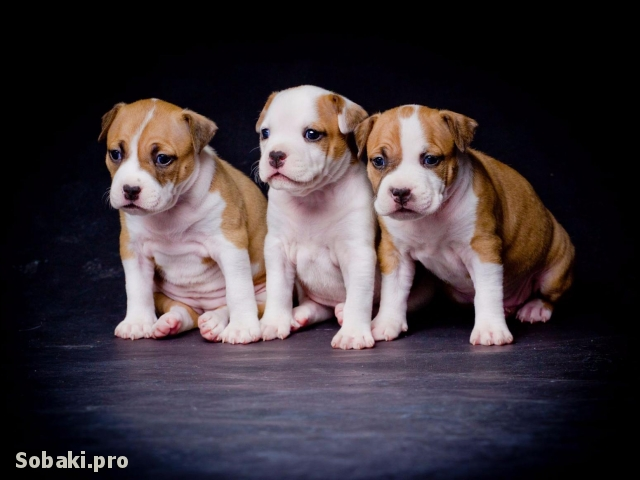 Девочки. 