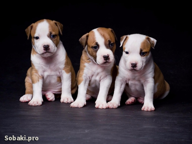 Мальчики 1. 