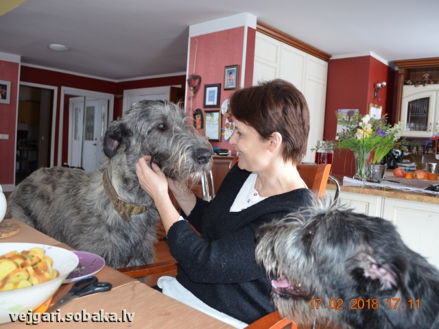 Irish Wolfhound 108300.jpg