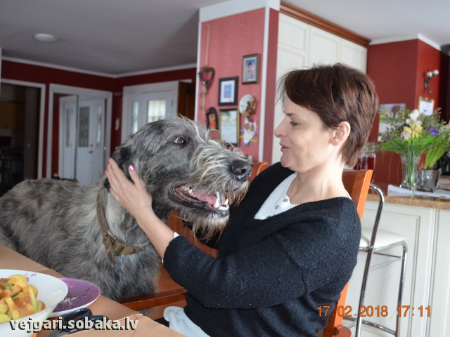 Irish Wolfhound 108301.jpg
