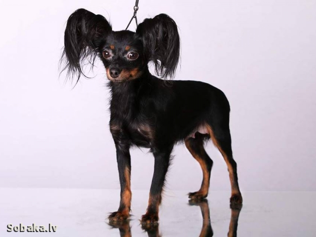 Луна 19.10.2017 год. 