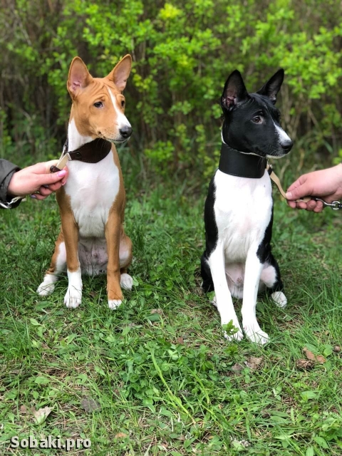 Братишки. 