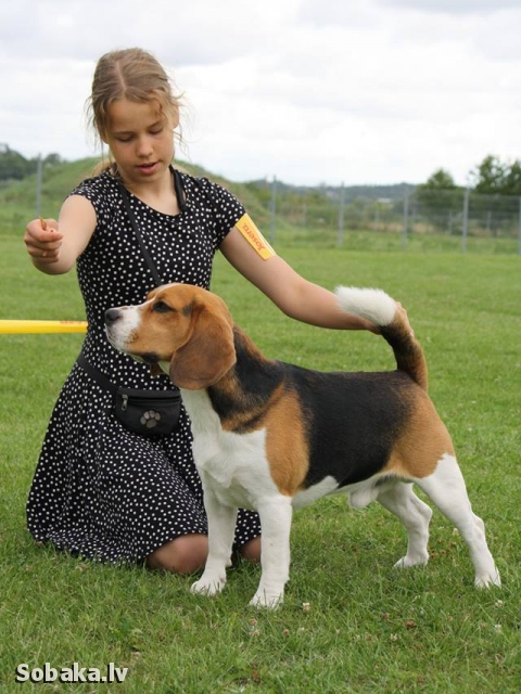 BEAGLE => PHOTOS  
