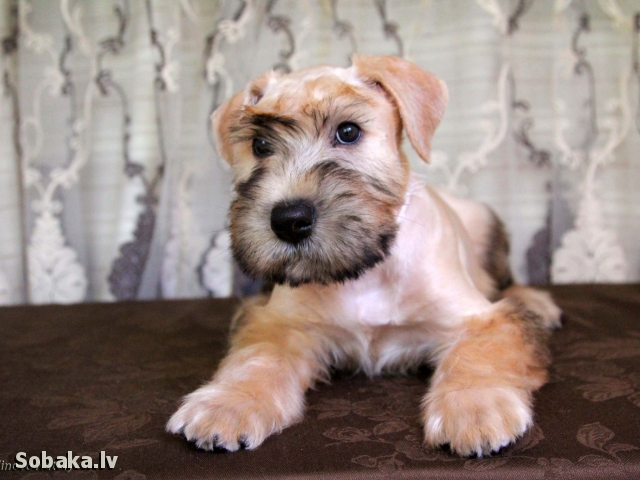 Люша. 