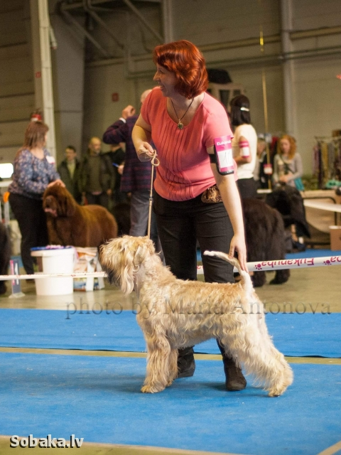 Мама щенков. 
