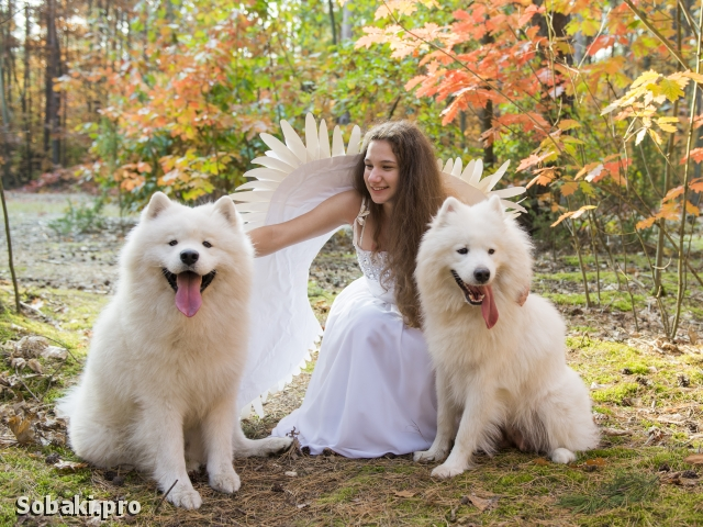 День Ангела. 