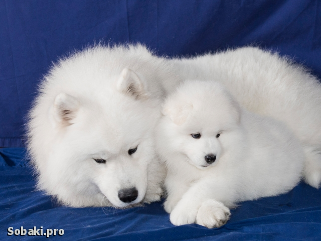 Не бойся, я с тобой!. 