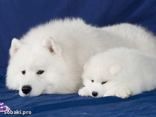 Релакс. 