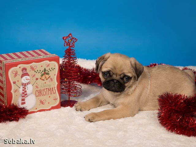 PUG => PHOTOS  