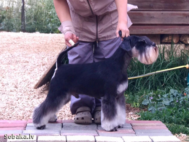После груминга. 