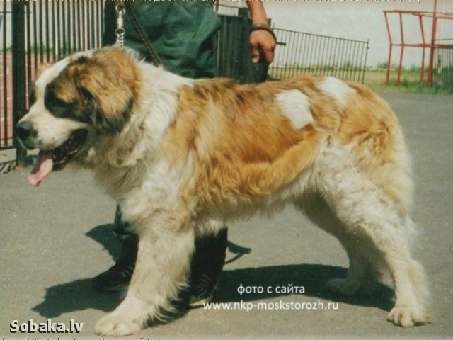 MOSCOW WATCHDOG => PHOTOS  