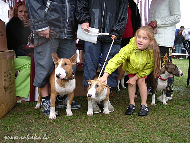 Bull Terrier & Miniature Bull Terrier 