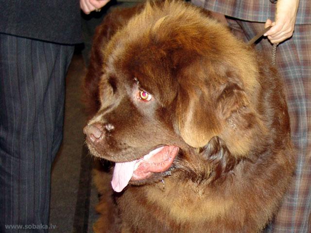 Канадская эскимосская собака фото 7