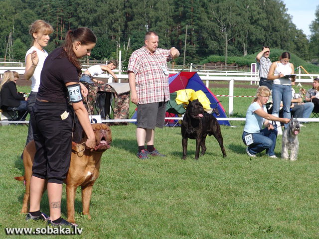Конкурс 2-ой группы FCI . 