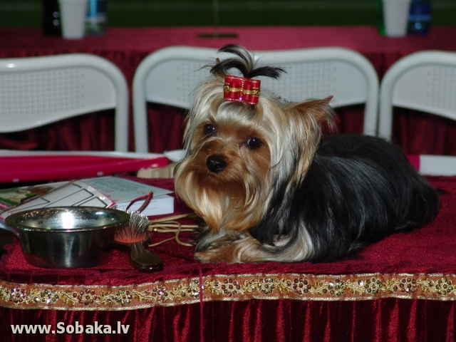 ФОТОГАЛЕРЕЯ. International Dog Show.