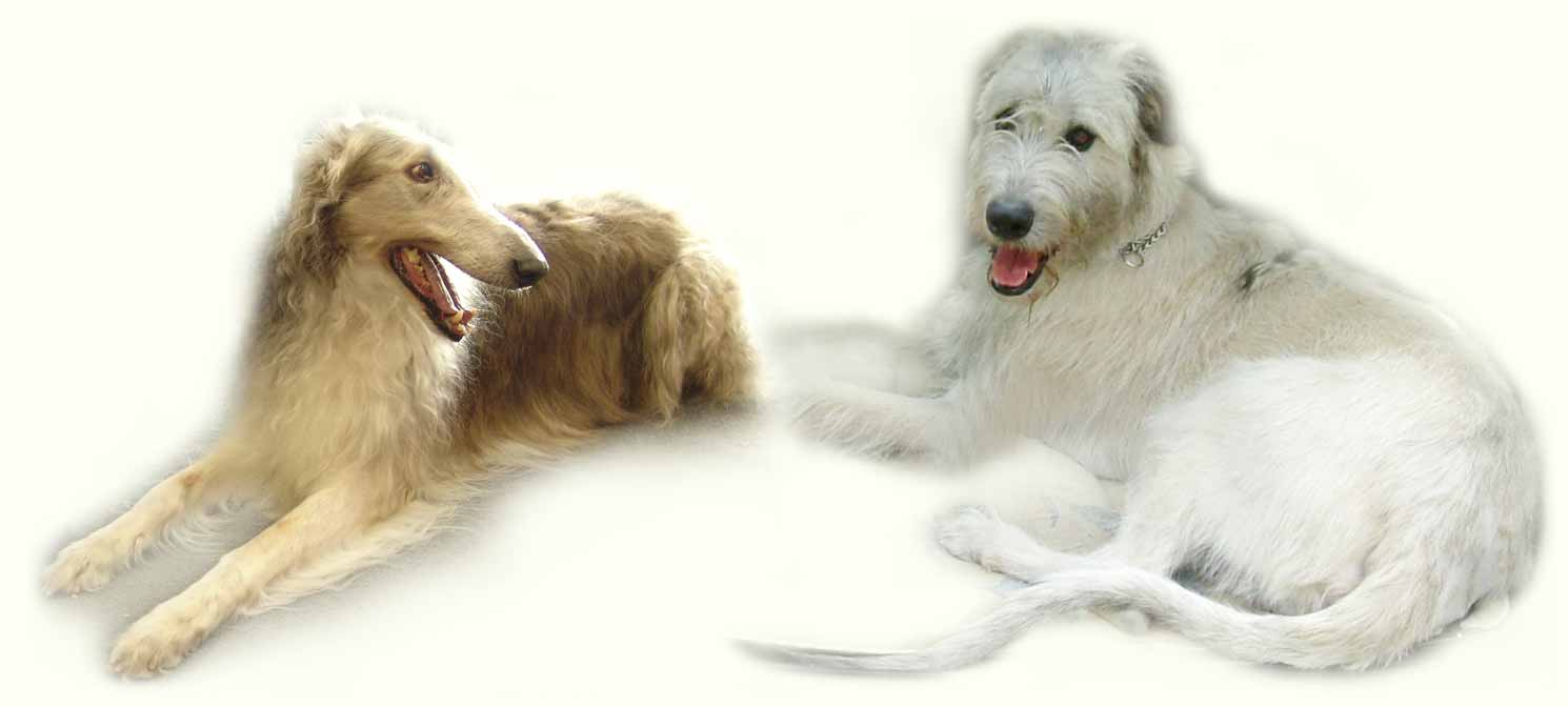 Dogs of all breeds and all breeds of dogs!